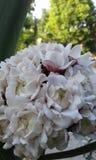 Fleur couleurs blanc Vert noir Photos stock