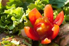 Fleur coupée de la tomate-cerise rouge Photographie stock libre de droits