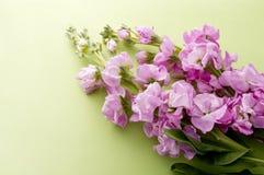 Fleur courante photo stock