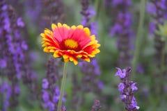 Fleur couvrante indienne Images stock