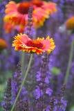 Fleur couvrante indienne Photo libre de droits