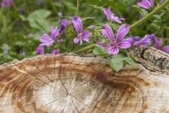 Fleur cramoisie Photo libre de droits