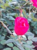 Fleur croquante Photographie stock