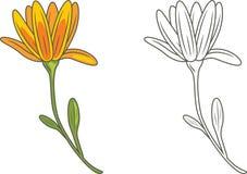 Fleur décrite et jaune d'isolement sur le blanc photographie stock libre de droits