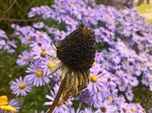 Fleur défraîchie Photo libre de droits