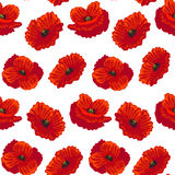 Fleur détaillée réaliste Poppy Background Pattern Vecteur illustration libre de droits