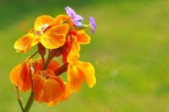 Fleur d'été Photos libres de droits