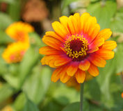 Fleur d'été Photo stock