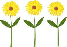 Fleur d'été Image stock