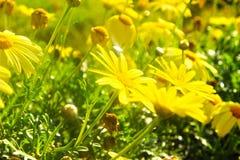 Fleur d'été Photographie stock libre de droits