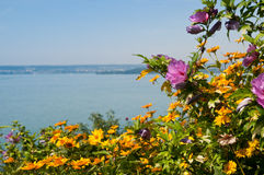 Fleur d'été au lac Images stock