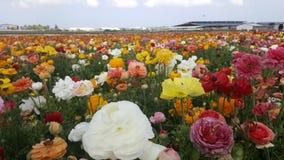 Fleur d'été dans introduite un jour ensoleillé Image libre de droits