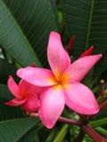 Fleur d'étoile Photo stock