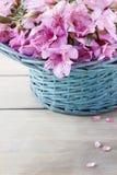 Fleur d'Alstroemeria Photos libres de droits