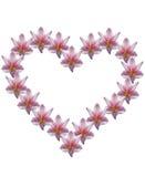 Fleur d'Amaryllis dans la forme de coeur Photographie stock libre de droits