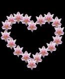 Fleur d'Amaryllis dans la forme de coeur Images stock