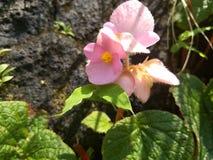 Fleur d'amour Image stock
