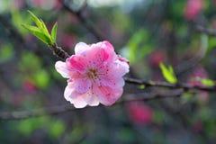 Fleur d'amour Photo libre de droits