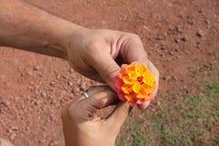 Fleur d'amour Photographie stock libre de droits