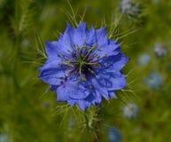 fleur d'Amour-dans-un-brouillard Photographie stock libre de droits