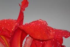 Fleur d'amour de l'eau ! Photo stock