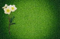 Fleur d'anémone sur le tissu élastique de mode, endroit vide pour le texte Photos libres de droits