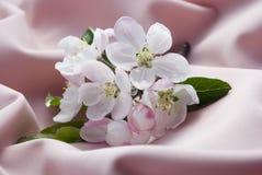 Fleur d'Apple image stock