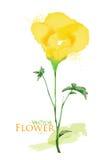 Fleur d'aquarelle Photos libres de droits