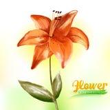 Fleur d'aquarelle Photographie stock libre de droits