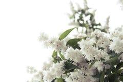 Fleur d'arbre Image stock