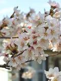 Fleur d'arbre Photographie stock