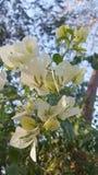 Fleur d'arbre d'hiver Photographie stock libre de droits