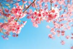 fleur d'arbre de Sakura sur le ciel bleu photographie stock