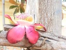 Fleur d'arbre de sel Photos stock