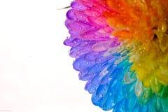Fleur d'arc-en-ciel Images stock