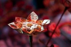 Fleur d'argent Photos stock