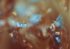 Fleur d'art de nature Photos libres de droits