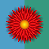 Fleur d'aster photos libres de droits