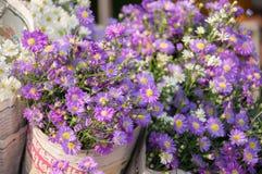 Fleur d'aster au marché. Image libre de droits