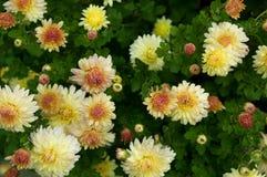 Fleur d'automne Photo libre de droits