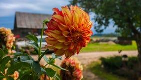 Fleur d'automne Images stock