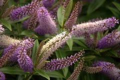 Fleur d'automne Photo stock