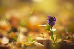 Fleur d'automne Images libres de droits