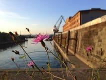 Fleur d'automne Image stock