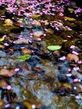 Fleur d'automnes au wate courant Images stock