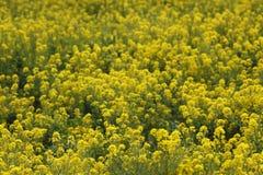 Fleur d'Awaji Image stock