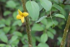 Fleur d'or dans les arbres Image libre de droits
