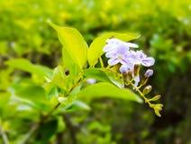 Fleur d'or de goutte de rosée photographie stock libre de droits