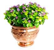 Fleur d'Exacum dans le vase de cuivre photo stock