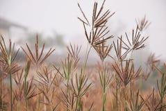 Fleur d'herbe Photographie stock libre de droits